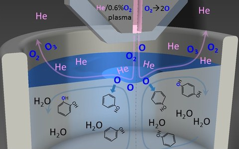 The fate of plasma-generated oxygen atoms in aqueous solutions.
